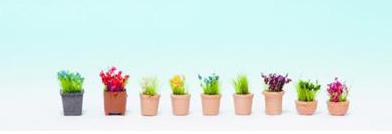 Ornimental Flowers in pots - Noch 14064